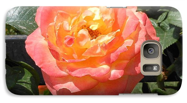 Galaxy Case featuring the photograph Beijing Rose  by Kay Gilley