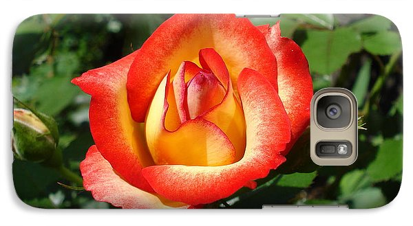 Galaxy Case featuring the photograph Betty Boop Rose by June Holwell