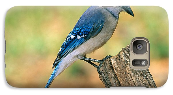 Blue Jay Galaxy S7 Case by Millard H. Sharp