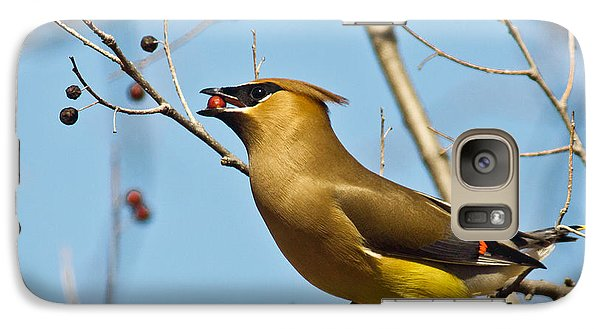 Cedar Waxwing With Berry Galaxy Case by Robert Frederick