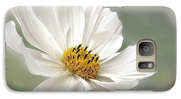 Cosmos Flower In White Galaxy S7 Case by Kaye Menner