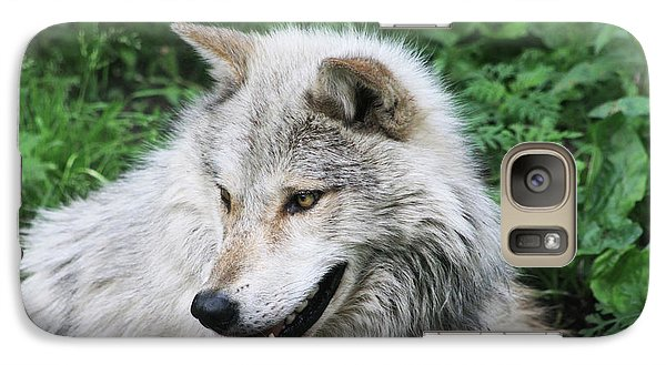 Galaxy Case featuring the photograph Gray Wolf by Alyce Taylor