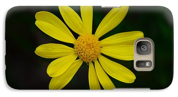 Galaxy Case featuring the photograph Isolated Daisy by Debra Martz