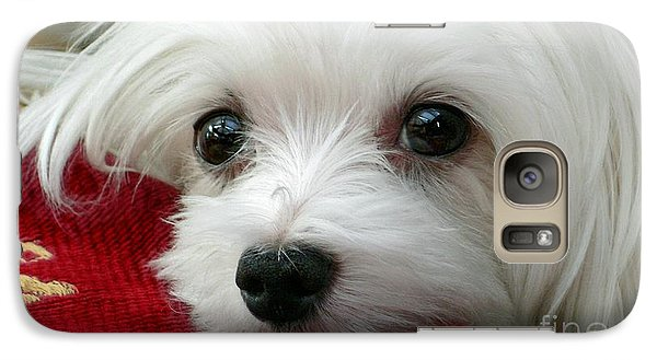 Galaxy Case featuring the mixed media Snowdrop The Maltese by Morag Bates