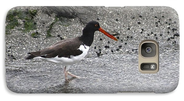 Galaxy Case featuring the photograph American Oyster Catcher  by Jeanne Kay Juhos