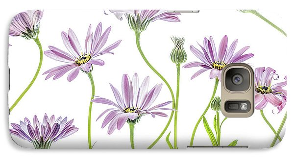Daisy Galaxy S7 Case - Cape Daisies by Mandy Disher