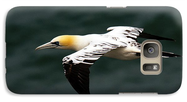 Galaxy Case featuring the photograph Gannet  by Paul Scoullar