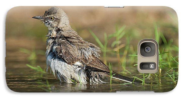 Mockingbird Galaxy S7 Case - Usa, Texas, Starr County by Jaynes Gallery