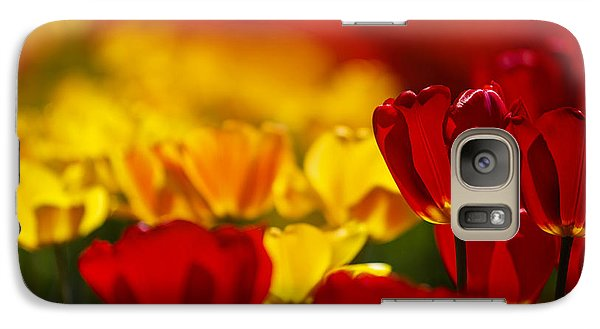 Tulip Galaxy S7 Case - Red And Yellow Tulips by Nailia Schwarz