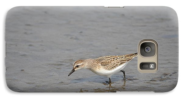 Galaxy Case featuring the photograph Semipalmated Sandpiper by James Petersen