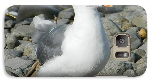 Galaxy Case featuring the photograph A Curious Seagull by Chalet Roome-Rigdon
