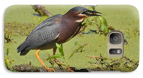 Galaxy Case featuring the photograph A Greenbacked Heron's Breakfast by Kathy Baccari