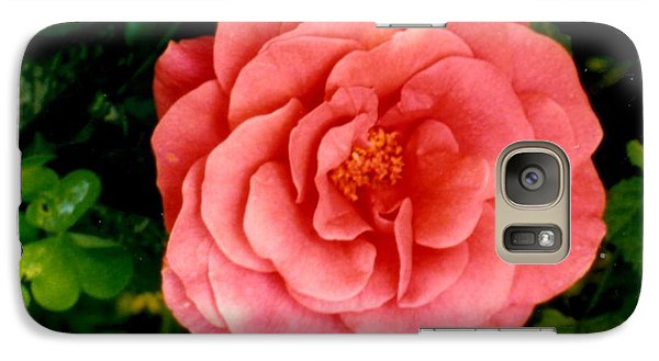 Galaxy Case featuring the photograph A Pink Rose by Mary Armstrong