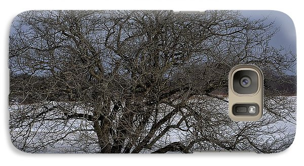 Galaxy Case featuring the photograph A Tree In Canaan 2 by Randy Bodkins