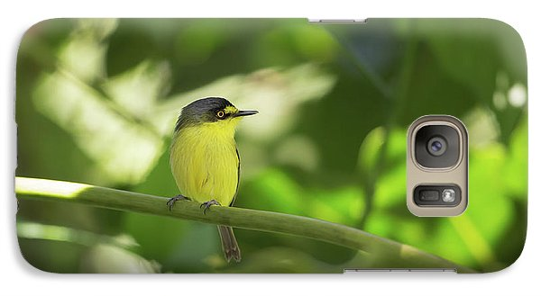 Flycatcher Galaxy S7 Case - A Yellow-lored Tody Flycatcher by Alex Saberi