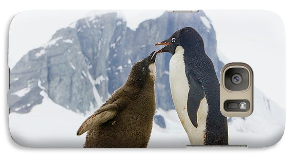 Adelie Penguin Chick Begging For Food Galaxy S7 Case