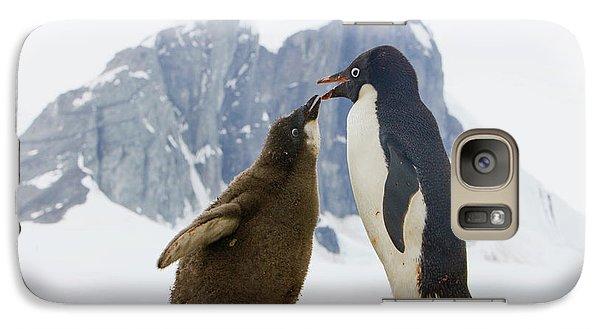 Adelie Penguin Chick Begging For Food Galaxy S7 Case by Yva Momatiuk John Eastcott