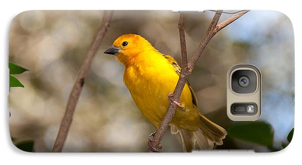 Galaxy Case featuring the photograph African Golden Weaver by John Black