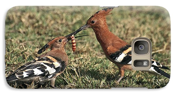 Galaxy Case featuring the photograph African Hoopoe Feeding Young by Liz Leyden