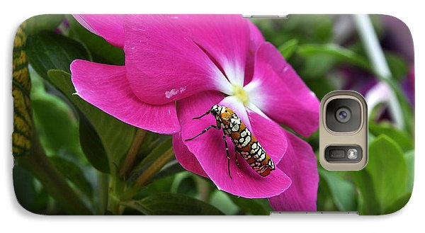 Galaxy Case featuring the photograph Ailanthus Webworm Moth Visiting My Garden by Verana Stark