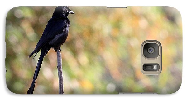 Galaxy Case featuring the photograph Alone - Black Drongo  by Ramabhadran Thirupattur