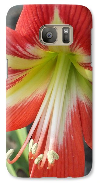 Galaxy Case featuring the photograph Amarylis Full Bloom by Belinda Lee