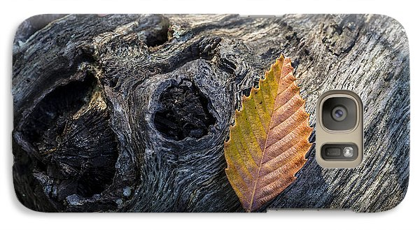 Galaxy Case featuring the photograph American Beech Leaf by Andrew Pacheco