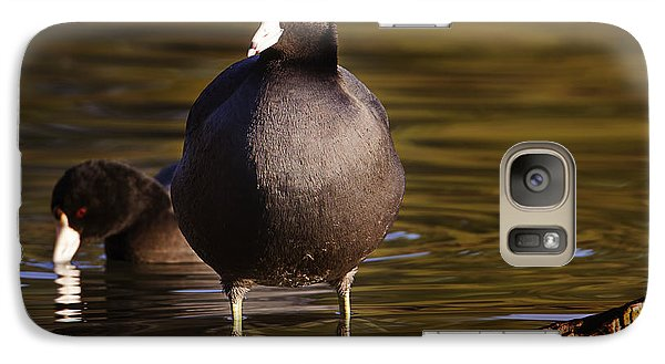 Galaxy Case featuring the photograph American Coot  by Brian Cross