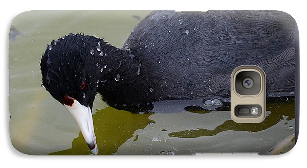 Galaxy Case featuring the photograph American Coot by Debra Martz