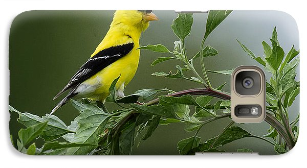 Galaxy Case featuring the photograph American Goldfinch Delight 2 by David Lester