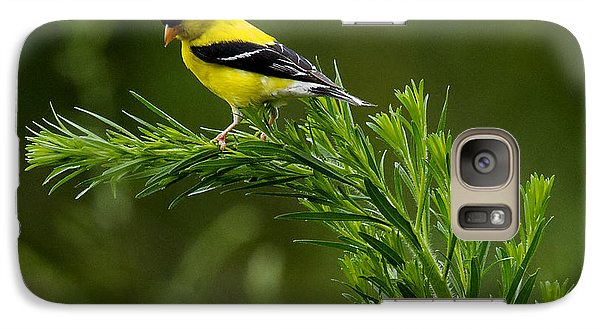 Galaxy Case featuring the photograph American Goldfinch Delight by David Lester