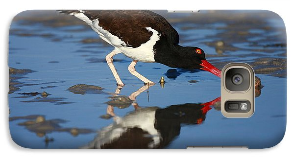 Galaxy Case featuring the photograph American Oystercatcher Mirror by John F Tsumas