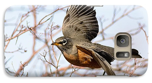 Galaxy Case featuring the photograph American Robin In Flight by Stephen  Johnson