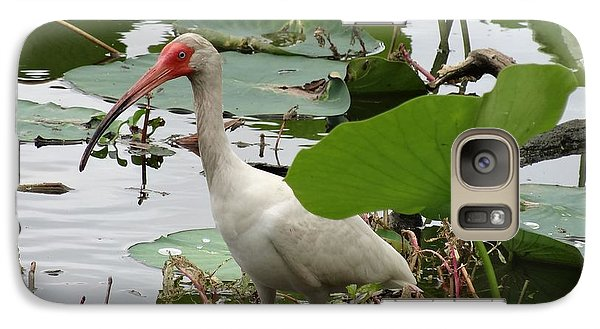 American White Ibis In Brazos Bend Galaxy S7 Case by Dan Sproul
