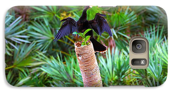 Anhinga Galaxy S7 Case - Anhinga Anhinga Anhinga On A Tree by Panoramic Images