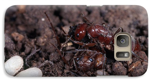 Ant Queen Fight Galaxy S7 Case by Gregory G. Dimijian, M.D.