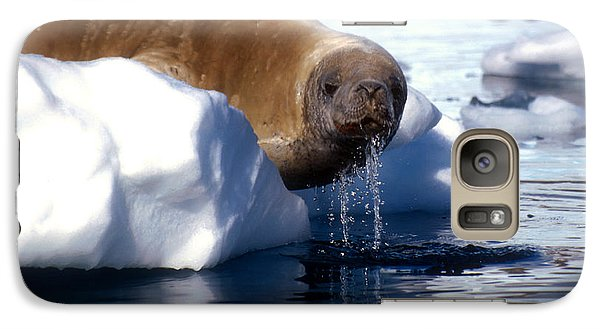 Galaxy Case featuring the photograph Antarctic Crabeater Seal by Dennis Cox WorldViews