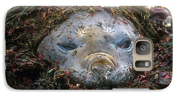 Galaxy Case featuring the photograph Antarctic Elephant Seal by Dennis Cox WorldViews