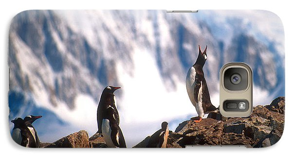 Galaxy Case featuring the photograph Antarctic Gentoo Penguins by Dennis Cox WorldViews
