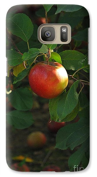 Galaxy Case featuring the photograph Apple On Tree by Kathy Gibbons