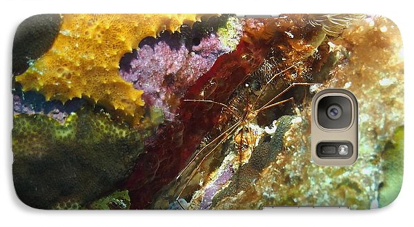 Galaxy Case featuring the photograph Arrow Crab In A Rainbow Of Coral by Amy McDaniel