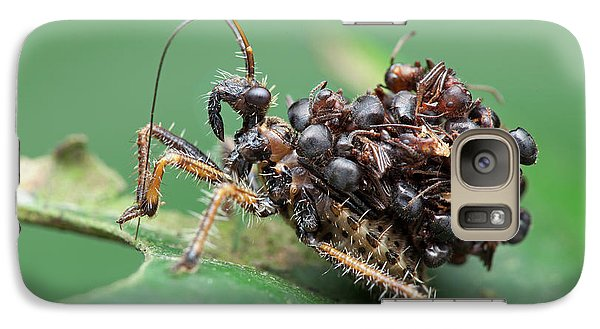 Assassin Bug Nymph With Ants Galaxy S7 Case by Melvyn Yeo