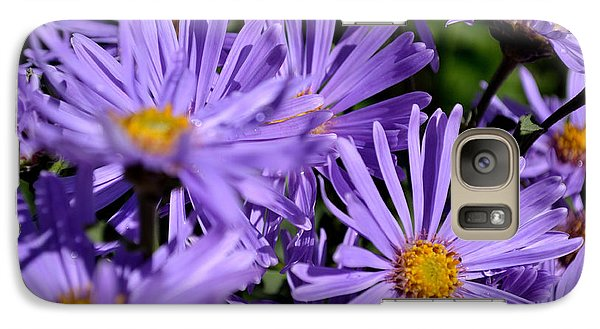 Galaxy Case featuring the photograph Asters After The Rain by Scott Lyons