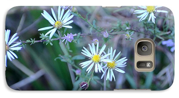 Galaxy Case featuring the photograph Asters by Linda Brown