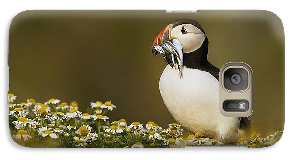 Atlantic Puffin Carrying Fish Skomer Galaxy S7 Case by Sebastian Kennerknecht
