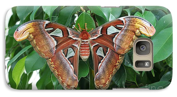 Galaxy Case featuring the photograph Atlas Moth #2 by Judy Whitton