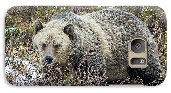 Galaxy Case featuring the photograph Autumn Grizzly by Jack Bell