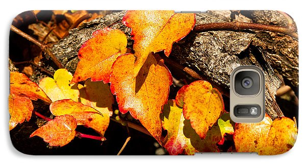 Galaxy Case featuring the photograph Autumn Ivy by Crystal Hoeveler