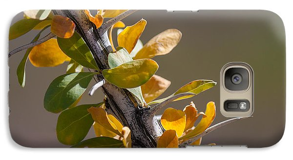 Galaxy Case featuring the photograph Autumn Ocotillo by Beverly Parks