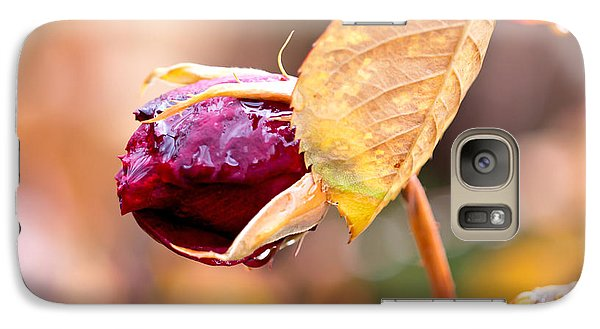 Galaxy Case featuring the photograph Autumn Rosebud by Rona Black